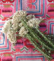 fynbos pattern